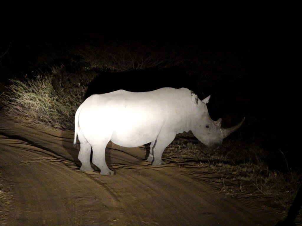 Rhinos in Botswana