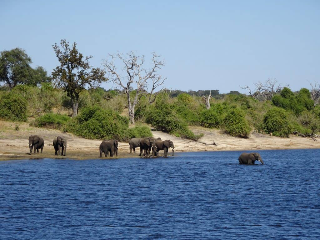 first africa safari swimming elephants