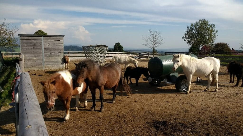 Ponies at Aiderbichl