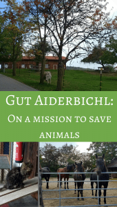 Gut Aiderbichl animal shelter