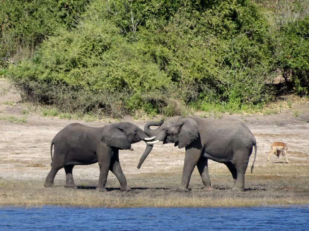 2017 travel highlights - Chobe elephants