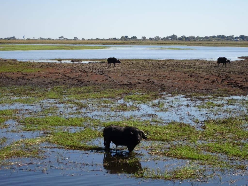 2017 travel highlights - Chobe National Park