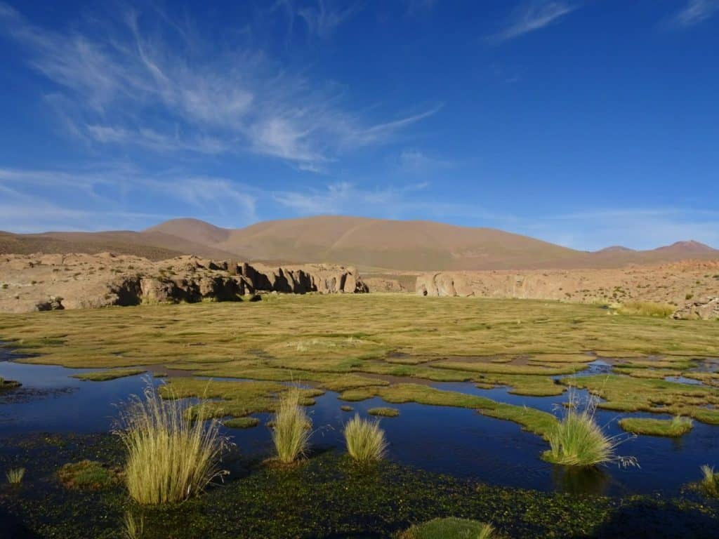 marsh land in Bolivia