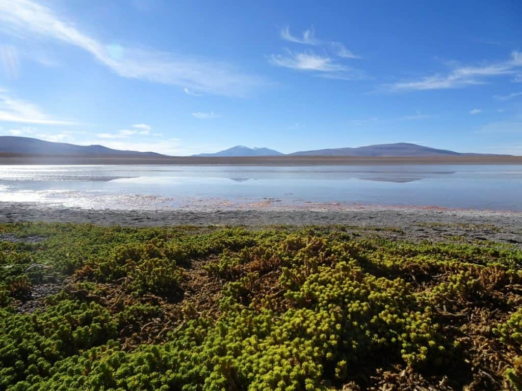 lagoon in Southern Bolivia