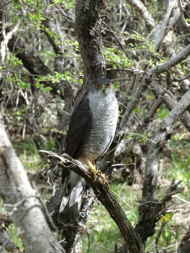 Torres del Paine Bird of Prey