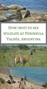 How (not) to see wildlife at Peninsula Valdés