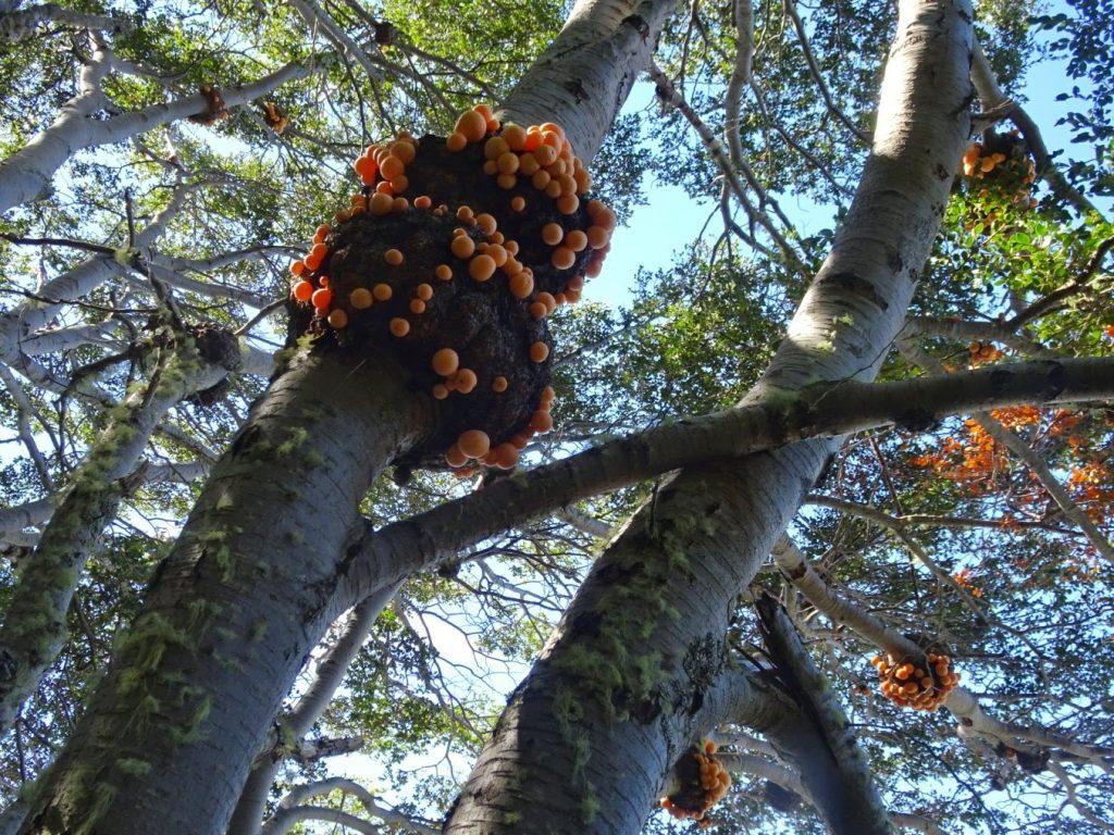 Trees in Tierra del Fuego NP, Ushuaia, Argentina