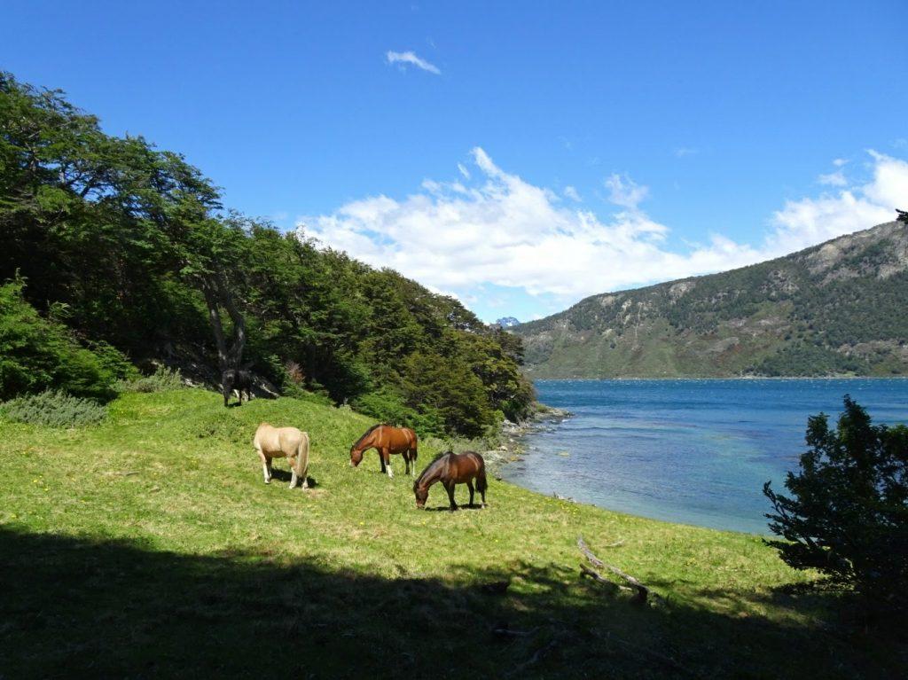 Horses in Tierra del Fuego NP, Patagonia, Argentina