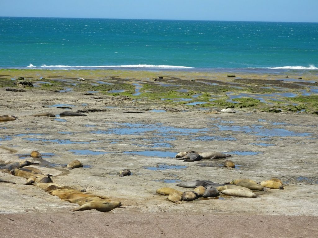 Elephant seals, Peninsula Valdes, Argentina