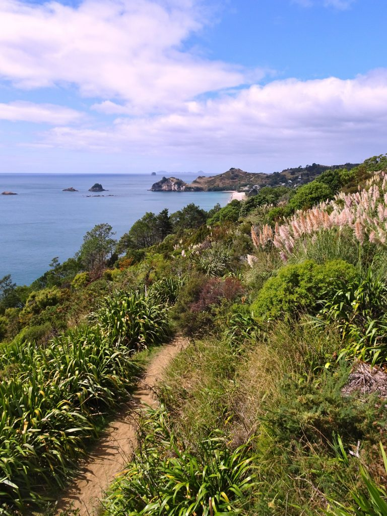 Cathedral Cove lookout, Coromandel Coast, New Zealand