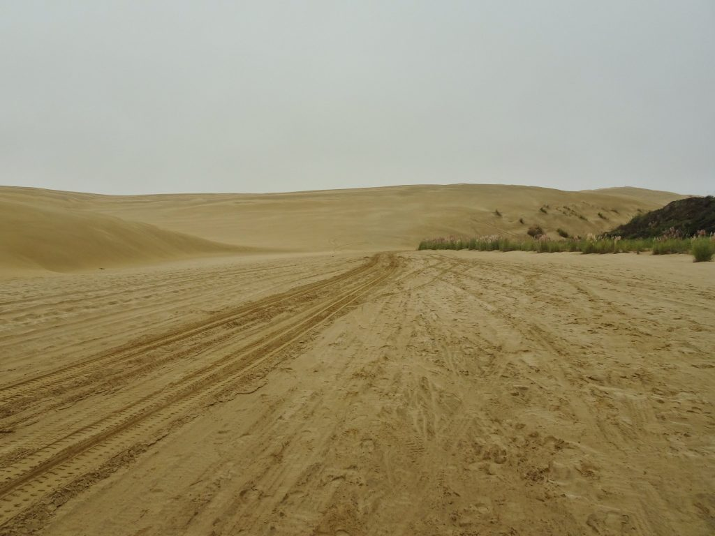 Sand dunes at Ninety Mile Beach, New Zealand