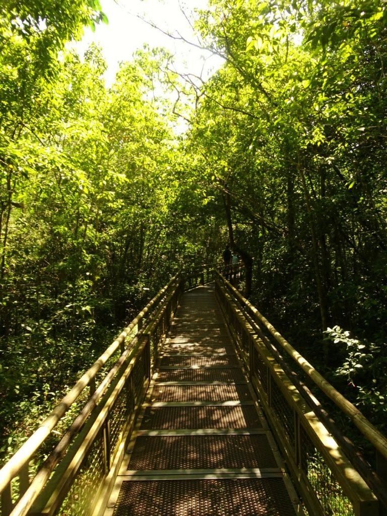Tree-lined walkway at Iguazu Falls, Argentina