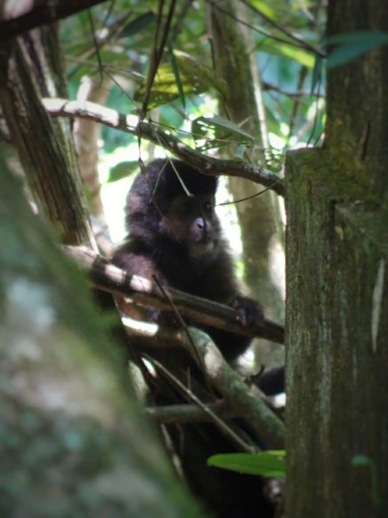 Monkey at Iguazu Falls, Argentina