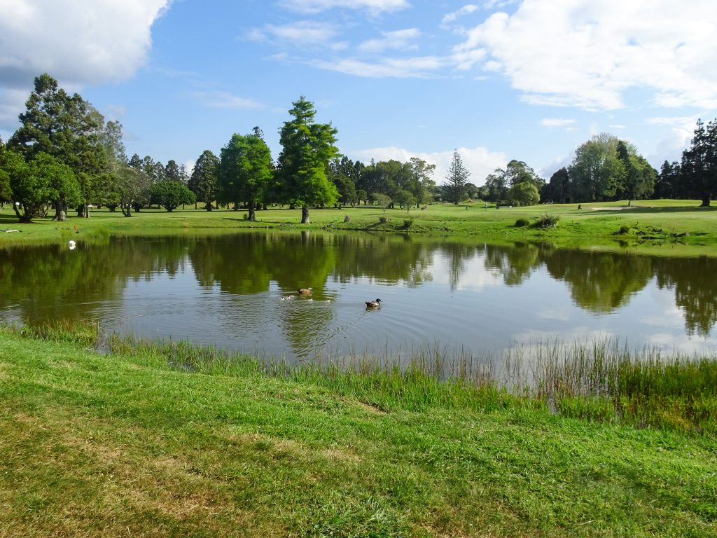 Lake with ducks on golf course in Auckland, New Zealand