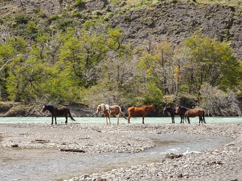 Horses at river in Torres del Paine National Park, Patagonia, Chile